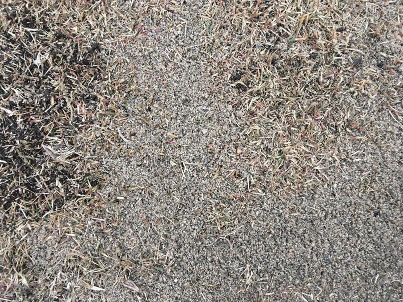 芝の目土をいれます