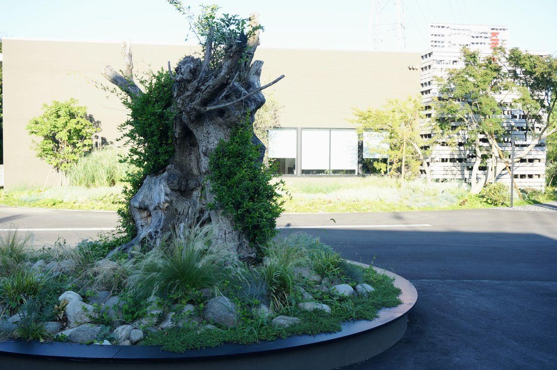 キッチンハウス立川ショールームの駐車場の木